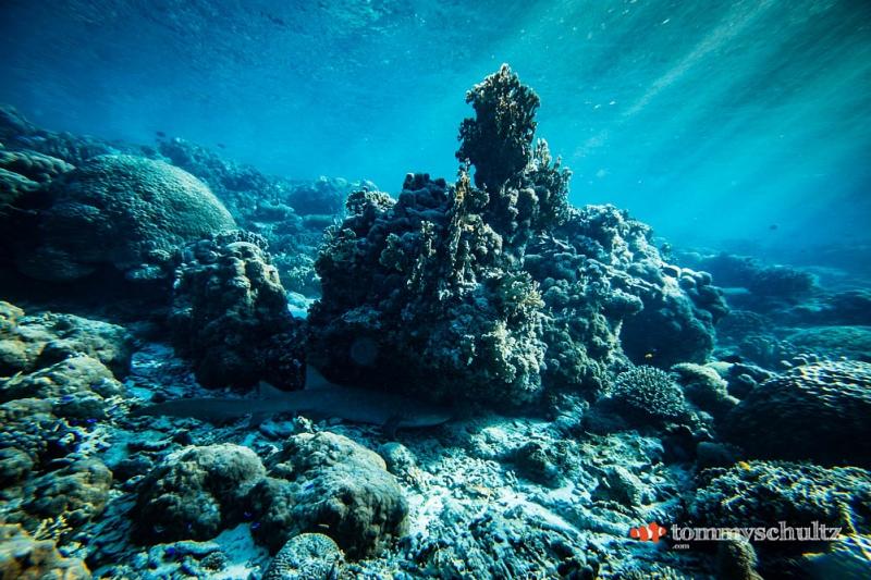 travel-underwater-surf-photography-2016-93